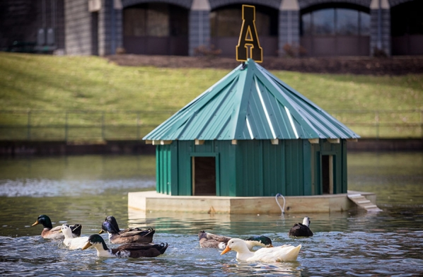 A floating shelter for campus ducks was installed on the Appalachian Duck Pond Monday. The block A logo on the shelter's roof is made of recycled metal. Photo by Marie Freeman