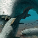 This image displays the prehistoric Dunkleosteus — a large, armored fish that existed during the Late Devonian period, or about 380–360 years ago. Image by Jaime Chirinos/Science Photo Library