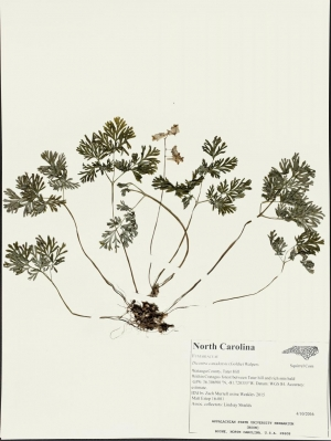 High Country Herbarium