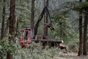 forest restoration and carbon emissions