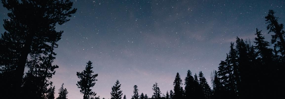 Image of Forest, Starry Sky. <a href='https://www.freepik.com/photos/wood'>Wood photo created by wirestock - www.freepik.com</a>