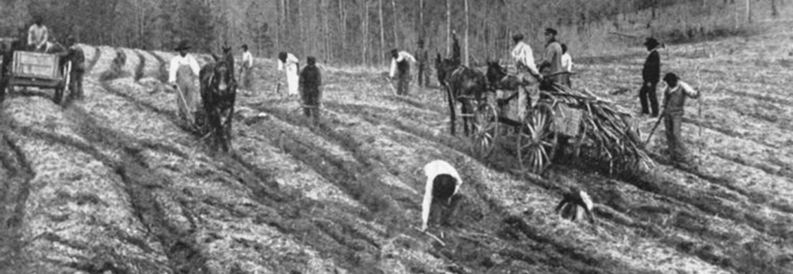 Image: Planting sugar-cane on a Louisiana plantation. Date Issued: 1909 - 1913 (Approximate) Place: Richmond, Va. Publisher: The Southern historical publication society. Part of New York Public Library Collection.