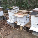 Four honeybee hives in the local Boone community are equipped with the Beemon system created by students and faculty members in the Department of Computer Science at Appalachian State University. The hive pictured third from left is currently empty; its location between two active hives allows for it to be used to measure the level of background noise. Photo submitted