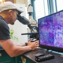Appalachian senior James Wise of Boone has focused his thesis research on pollen viability assays and cytological studies to identify genetic barriers to reproduction in Virginia's Spiraea. Photo by Marie Freeman