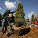Christmas Tree Workers in North Carolina