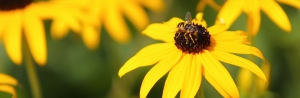 Counting bees, because bees count — App State creates pollinator-tracking app