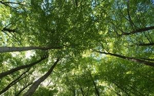 """What is a forest carbon offset? According to its website, The Climate Trust defines a forest carbon offset as """"a metric ton of carbon dioxide equivalent (CO2e) — the emission of which is avoided or newly stored — that is purchased by greenhouse gas emitters to compensate for emissions occurring elsewhere."""""""